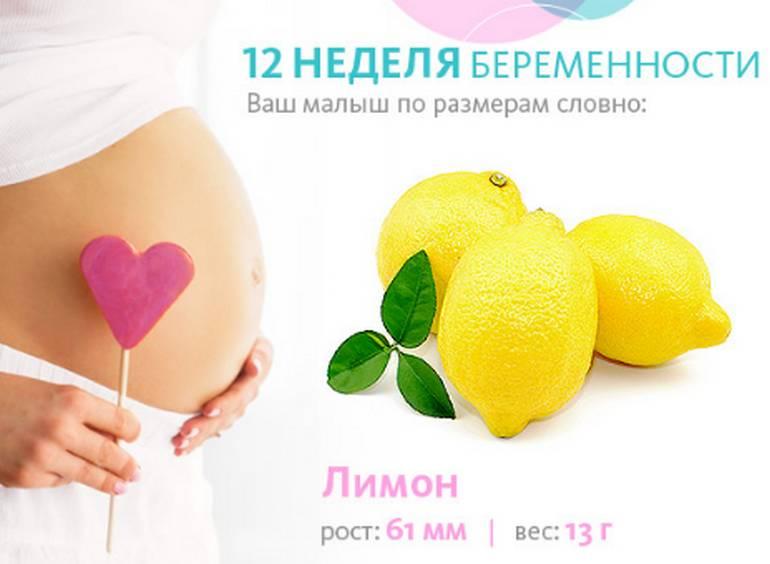 Беременность двенадцатая неделя