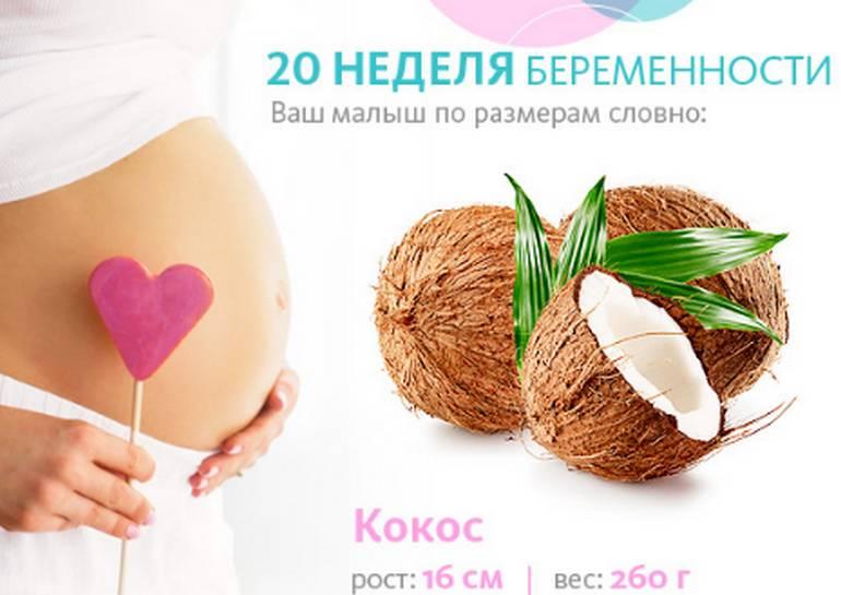 двадцать недель беременности