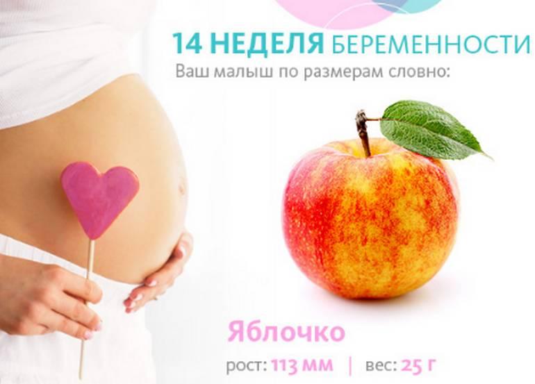 Сколько весит ребенок в 14 недель беременности